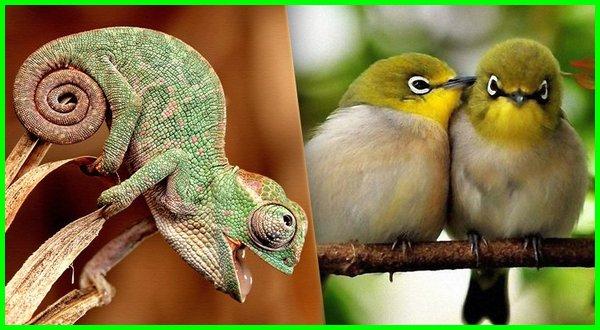 ciri vertebrata adalah, ciri vertebrata yang hanya dimiliki aves, ciri vertebrata brainly, ciri binatang vertebrata, ciri ciri hewan vertebrata beserta contohnya, ciri ciri hewan vertebrata beserta gambarnya, ciri ciri hewan vertebrata burung