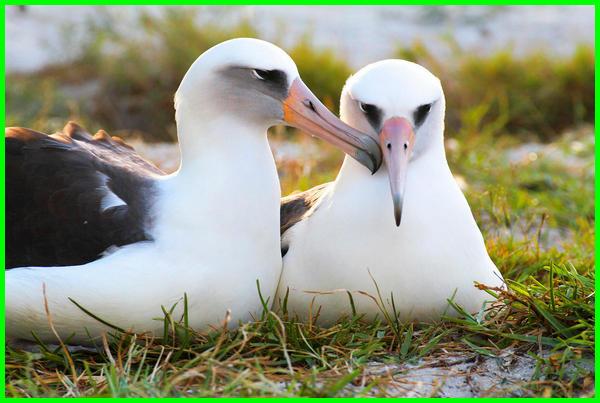 hewan yang setia sama satu pasangan, hewan yang setia terhadap pasangan, hewan yang setia pada temannya