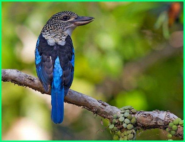 burung di Australia