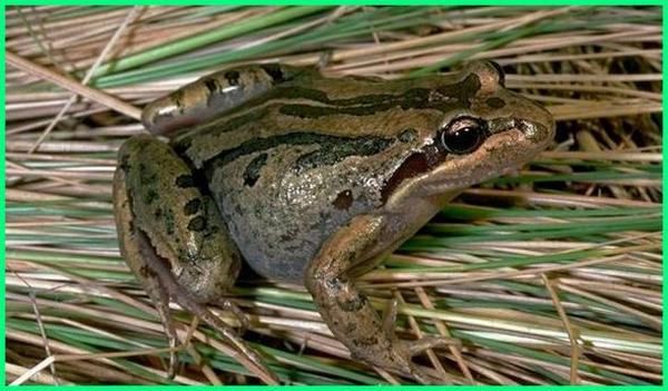 gambar fauna australia