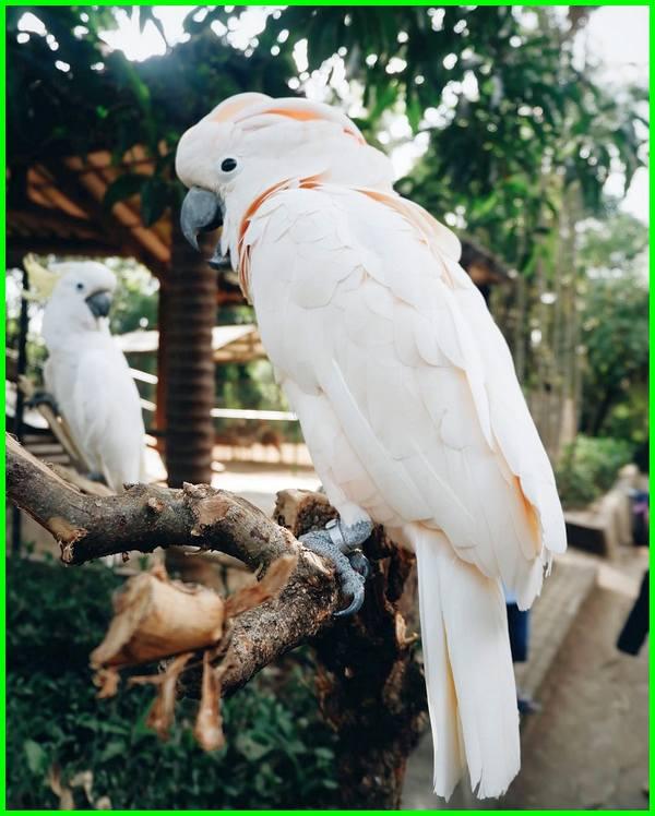 burung di penangkaran kebun binatang