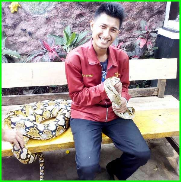orang dengan ular, ular python di kebun binatang
