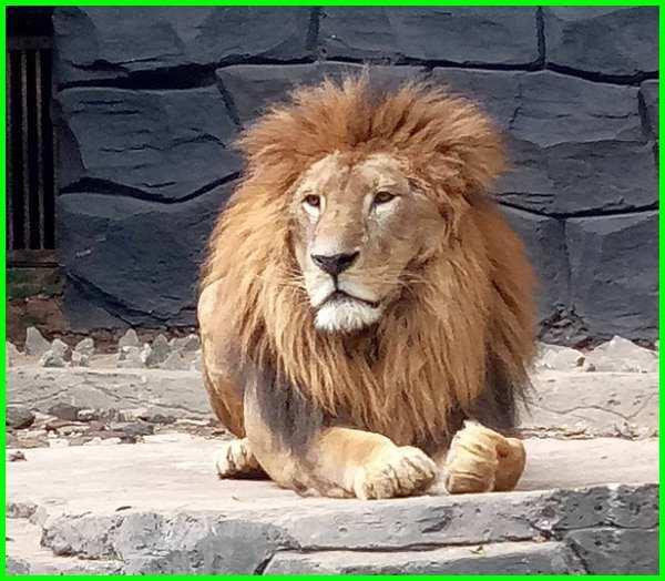 jenis macam-macam hewan di kebun binatang bandung