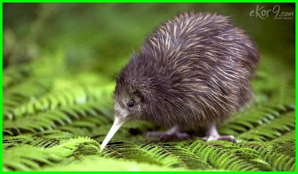 100 Nama Hewan A Sampai Z Dalam Bahasa Inggris Dunia Fauna