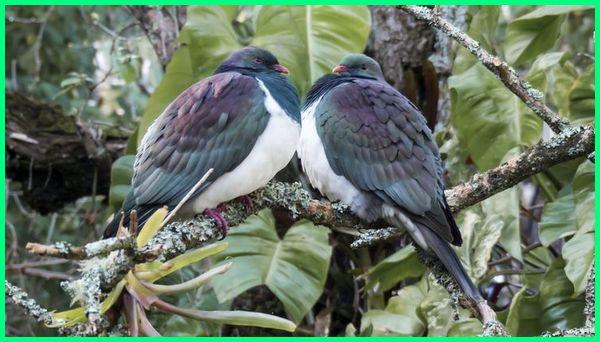burung selandia baru new zealand