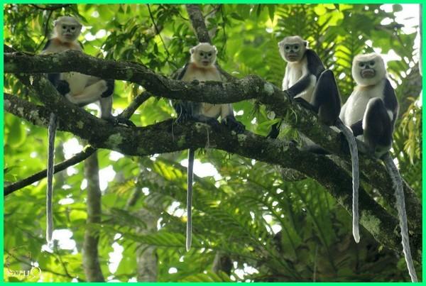 hewan vietnam, hewan khas vietnam, hewan langka vietnam, hewan negara vietnam