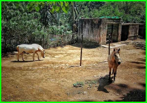 gambar kuda di kebun binatang