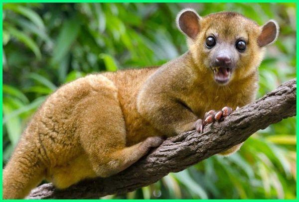 hewan penghuni hutan amazon, hewan hewan penghuni hutan amazon, hewan yg hidup di hutan amazon, hewan hewan aneh di hutan amazon, hewan hewan buas di hutan amazon, hewan khas hutan amazon, kumpulan hewan hutan amazon