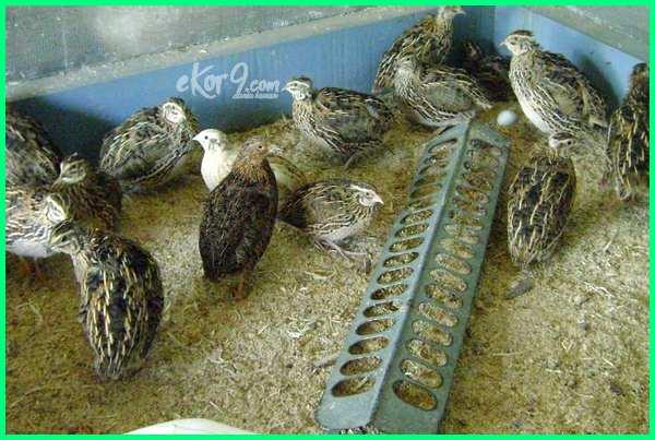 sebutkan yang termasuk jenis-jenis unggas dalam bahasa inggris, yang termasuk unggas, yang termasuk unggas pedaging, yang termasuk unggas indonesia timur, sebutkan yang termasuk unggas petelur, yang termasuk unggas adalah, yang termasuk binatang unggas, yang termasuk peternakan unggas adalah, yang termasuk ayam buras