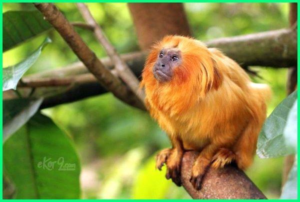 hewan hutan amazone