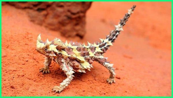 hewan liar australia