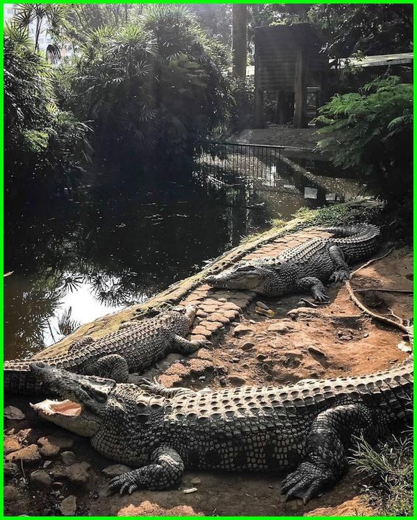 gambar hewan di kebun binatang bandung