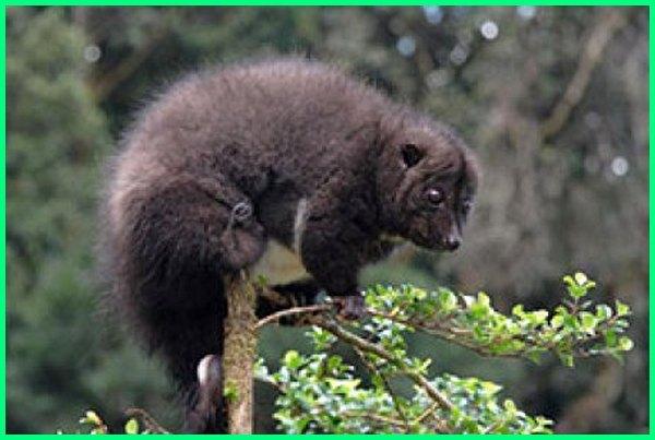 21 Jenis Hewan Yang Hidup Di Papua Nugini Dunia Fauna Hewan