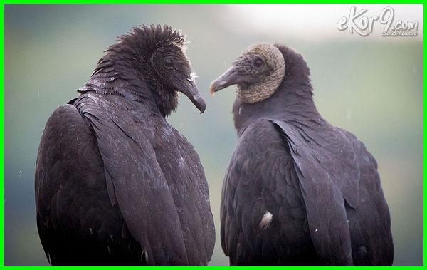 daftar hewan setia, filosofi hewan setia, hewan hewan setia, hewan lambang setia