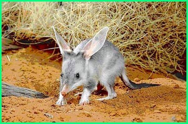 hewan wilayah australia