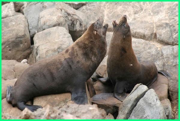 fauna selandia baru, fauna selandia baru (oceania), gambar fauna selandia baru, fauna dari selandia baru