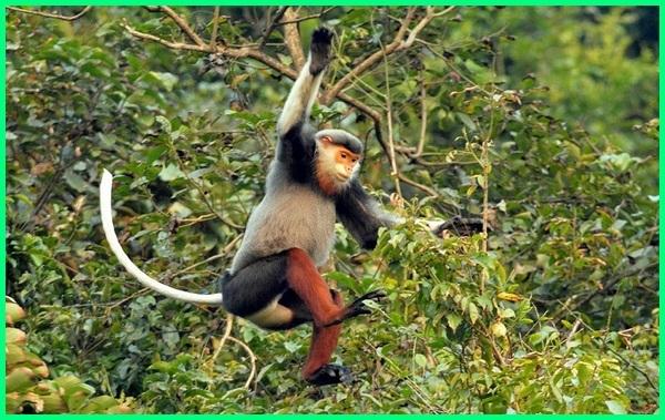 hewan asli vietnam, hewan unik di negara vietnam