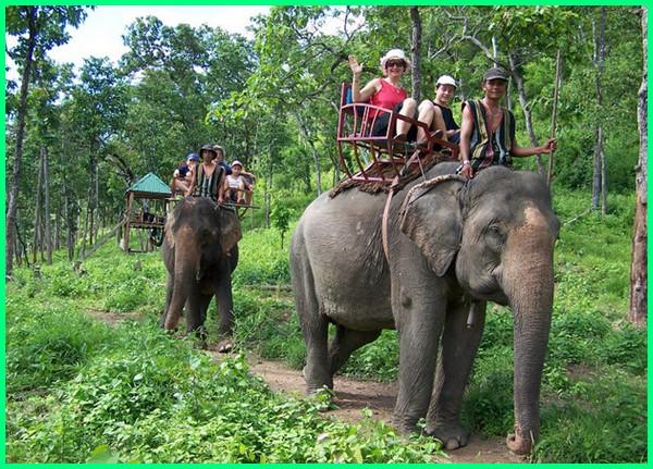 hewan negara vietnam