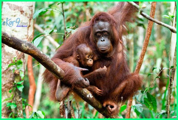 hewan khas indonesia