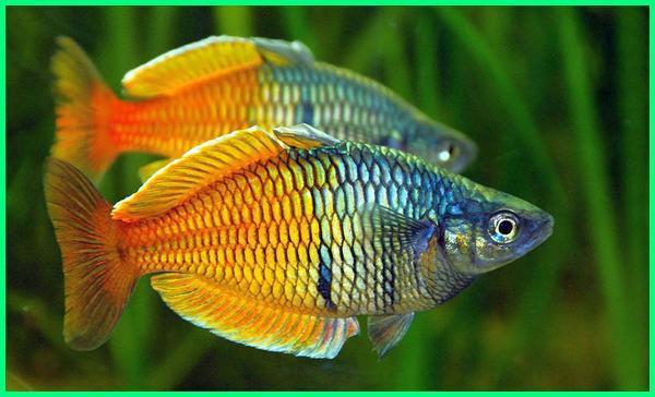 ikan recomended aquascape