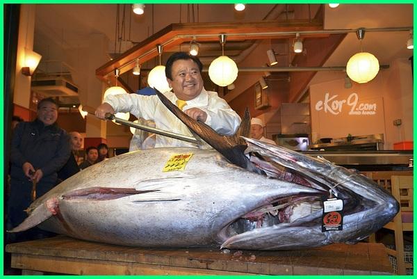 ikan tuna paling mahal di dunia, ikan tuna termahal di dunia sekarang saat ini