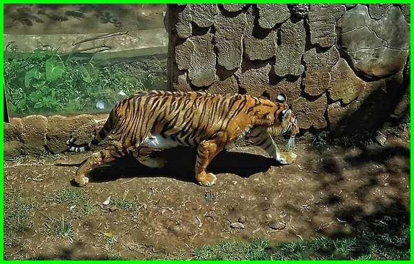 kondisi kebun binatang bandung