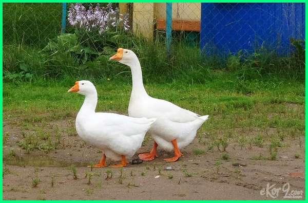 kesetiaan hewan pada pasangannya