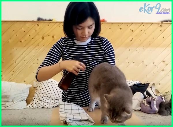 cara mandi kering kucing persia, mandi kering anak kucing, harga mandi kering kucing, cara mandi kering kucing hamil, cara mandi kering anak kucing, cara mandi kering pada kucing, cara mandi kering kucing, mandi kering pada kucing, mandi kering untuk kucing, cara mandi kering untuk kucing, bedak mandi kering kucing, bedak mandi kering kucing