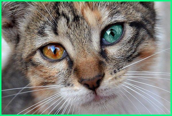 berita kucing