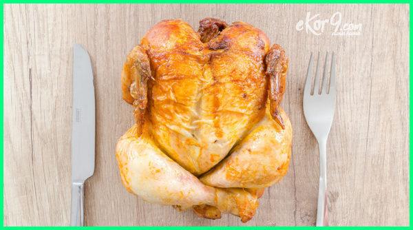 negara penghasil ayam paling terbesar di dunia adalah