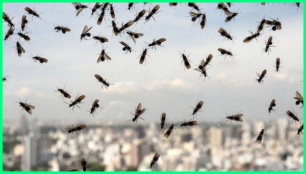 semut terbang menyengat, bahaya semut terbang, apakah semut terbang berbahaya, semut yang bisa terbang, apakah semut bisa terbang, tanda banyak semut terbang di rumah, kenapa banyak semut terbang di kamar, digigit semut hitam terbang, mitos semut terbang, penyebab semut terbang, ratu semut rangrang terbang, cara mengatasi semut rangrang terbang, ratu semut terbang sarang semut terbang, kenapa banyak semut terbang, tentang semut terbang