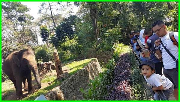 gambar wisata hewan kebun binatang
