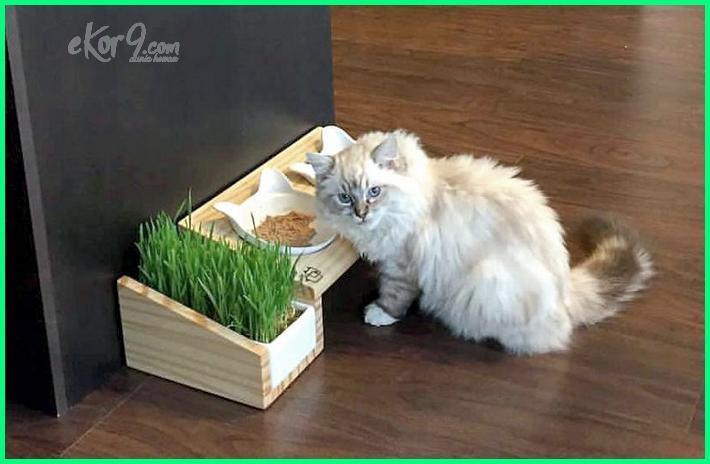 apa saja manfaat memelihara kucing, apa saja manfaat hewan kucing, apa manfaat kucing bagi manusia brainly, apa manfaat kucing bagi lingkungan, manfaat memelihara kucing warna hitam dan putih, 3 manfaat memelihara kucing, 5 manfaat memelihara kucing, 7-30 manfaat memelihara kucing