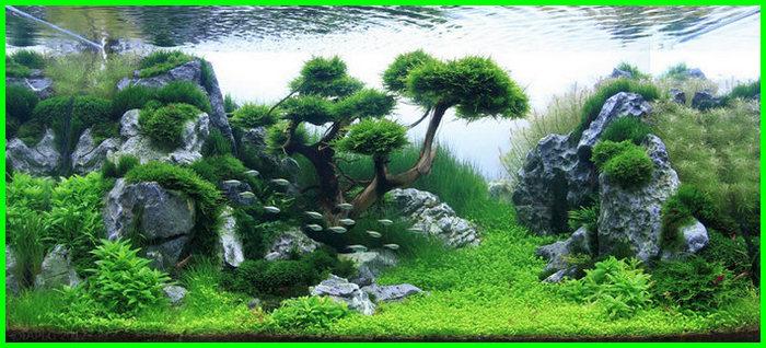 apakah aquascape perlu dibersihkan, apakah aquascape perlu heater, bagaimana aquascape tanpa co2, bagaimana cara membuat aquascape, bagaimana cara membersihkan aquascape, bagaimana cara merawat aquascape, bagaimana cara perawatan aquascape, bisakah aquascape tanpa filter