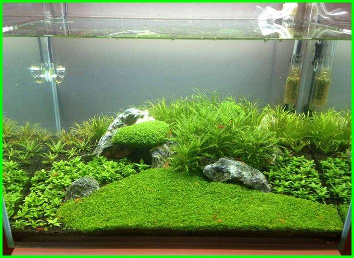 apa saja perlengkapan aquascape, berapa lama aquascape bertahan, berapa lama aquascape bisa diisi ikan, berapa lama aquascape mature, berapa lama aquascape, berapa lama aquascape tumbuh, berapa lama tanaman aquascape tumbuh, berapa lama pencahayaan aquascape, berapa lama membuat aquascape