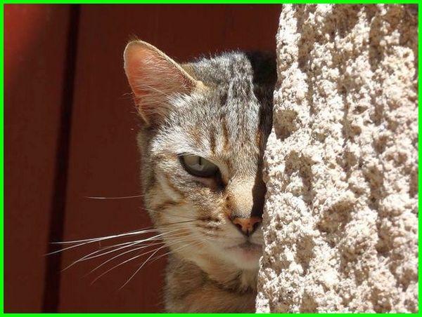 kucing mati, kucing mati mendadak, kucing mati pertanda, gambar kucing mati, kucing mati menurut islam, kucing mati di rumah, kucing mati masuk surga, kucing mati depan rumah, foto kucing mati, kucing mati dikubur atau dibuang, kucing mati togel, kucing anggora mati, kucing persia mati, kucing mati tertabrak, video kucing mati, kenapa anak kucing gampang mati, mimpi kucing mati menurut islam