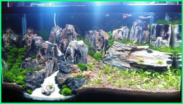 pasir apa saja untuk aquascape, akar apa saja untuk aquascape, tanaman apa saja untuk aquascape, apa saja yang ada di aquascape, apa aquascape itu, aquascape apa sih, apa itu aquascape iwagumi, apa bisa aquascape tanpa co2, apa itu aquascape nano, apa itu soil aquascape, apa itu twinstar aquascape, apa itu alga aquascape