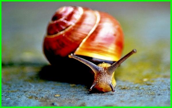 hewan yang bergerak menggunakan tentakel adalah, hewan yang bergerak dengan tentakel, hewan yang alat geraknya tentakel, hewan punya tentakel, hewan yang punya tentakel, tentakel pada hewan berongga, hewan bertentakel tts, hewan yang tentakelnya tidak mempunyai nematokis, hewan yang tentakelnya tidak mempunyai nematokis adalah, hewan yang tentakelnya tidak memiliki nematokis