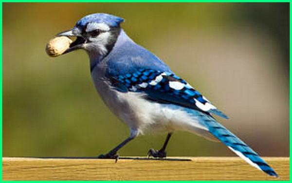 mencari nama ilmiah hewan, mencari nama latin hewan, mencari nama hewan hewan suka mencuri