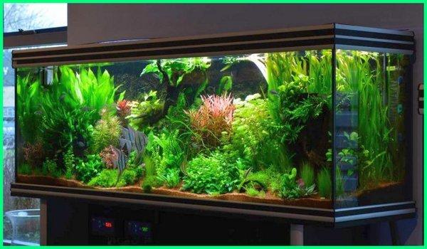 aquascape gaya belanda, bagaimana cara merawat aquascape, bagaimana cara perawatan aquascape, berapa lama aquascape bisa diisi ikan, berapa lama aquascape bertahan, berapa lama aquascape mature, berapa lama aquascape tumbuh, berapa lama tanaman aquascape tumbuh, berapa lama pencahayaan aquascape, berapa lama lampu aquascape berapa harga aquascape, berapa suhu aquascape, berapa lama aquascape, berapa ph aquascape, berapa jam lampu aquascape, bisakah aquascape tanpa co2, bisakah aquascape tanpa filter, bisakah aquascape tanpa pupuk dasar