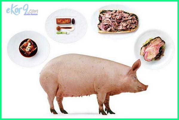 kenapa babi haram.com, cerita babi haram dalam islam, babi diharamkan, kenapa babi diharamkan, fakta babi haram menurut islam, gambar babi haram, kenapa babi haram untuk dimakan, kenapa babi haram untuk umat islam, mengapa babi haram untuk muslim, kenapa babi haram untuk umat muslim, mengapa daging babi haram untuk dimakan