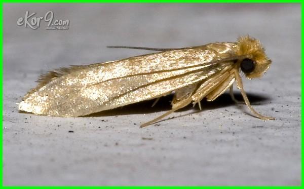 serangga perusak pakaian pemakan doraemon perosak pada adalah disebut di baju telur orang nama jawaban tts malay