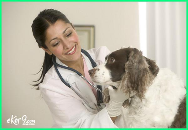 cara menjadi dokter hewan, cara penulisan dokter hewan, cara menjadi dokter hewan di the sims 4, cara penulisan gelar dokter hewan yang benar, cara mengurus sip dokter hewan, cara masuk jurusan dokter hewan, cara kerjasama dengan dokter hewan, cara menjadi asisten dokter hewan, cara agar menjadi dokter hewan