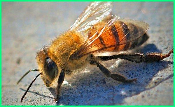 apakah gigitan serangga berbahaya, mengapa gigitan serangga jenis tertentu pada kulit dapat menyebabkan pembengkakan, sengatan serangga pdf, sengatan serangga berbahaya, sengatan serangga dan gigitan binatang, sengatan serangga berbisa, sengatan serangga mematikan, sengatan serangga adalah, sengat serangga, gigitan serangga agas, gigitan serangga alodokter, gigitan serangga alergi