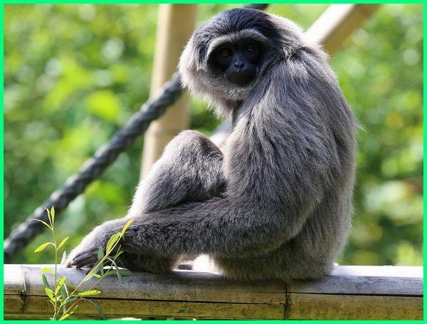 hewan hewan langka di pulau jawa, hewan hampir punah di pulau jawa, hewan endemik indonesia di pulau jawa, jenis hewan di pulau jawa, jenis hewan di pulau jawa yang sudah langka adalah, hewan khas pulau jawa, hewan dan tumbuhan khas pulau jawa