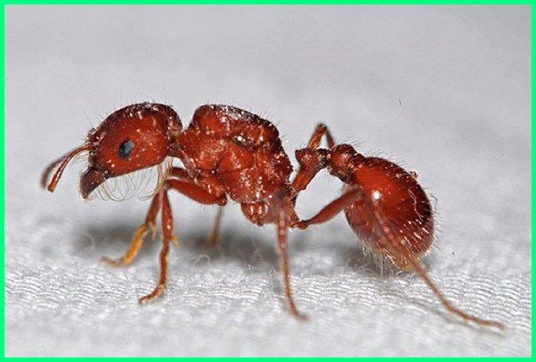 serangga paling mematikan, racun serangga mematikan, serangga mematikan di dunia, cara mematikan serangga di telinga, cara mematikan serangga dalam telinga, serangga yang mematikan di dunia, film serangga mematikan, gigitan serangga mematikan, gambar serangga mematikan, jenis serangga mematikan, cara mematikan serangga kecil