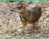 hewan apa saja di pulau jawa, hewan langka di pulau jawa dan bali, hewan yang berasal dari pulau jawa, ciri khas hewan pulau jawa, hewan di pulau jawa, nama hewan langka di pulau jawa dan bali