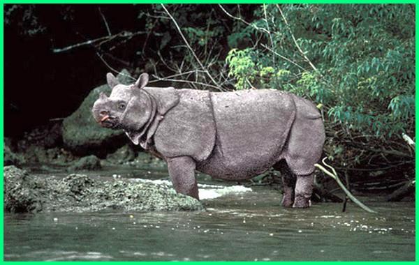 hewan endemik pulau jawa yang terancam punah, hewan hampir punah di pulau jawa
