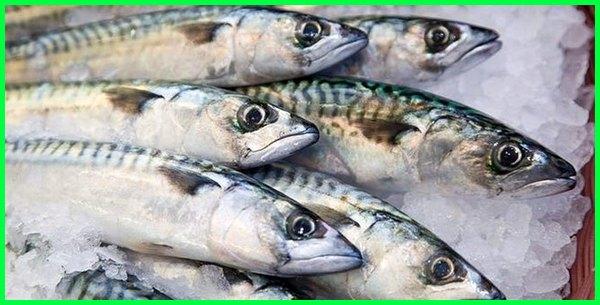 10 Jenis Ikan Laut Yang Enak Dimakan Apa Favorit Kamu Dunia Fauna Hewan Binatang Tumbuhan Dunia Fauna Hewan Binatang Tumbuhan