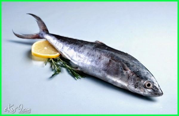 ikan tenggiri, jenis ikan laut paling enak, jenis ikan laut yang enak dimasak, jenis ikan laut yang enak di konsumsi, ikan laut yang enak dikonsumsi, ikan laut yang enak dimasak lawannya teri, nama ikan laut enak dimakan, ikan laut yg paling enak dimakan, macam ikan laut yang enak, nama ikan laut yang enak, olahan ikan laut yang enak, ikan laut paling enak
